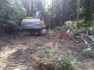 Heavy machinery was needed to clear vegetation - first step in construction.